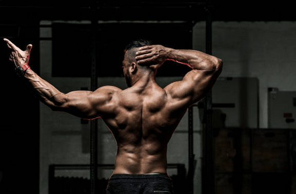 muscles-seche-sport-sportif-corps-salle-de-sport-musculation-dorsaux