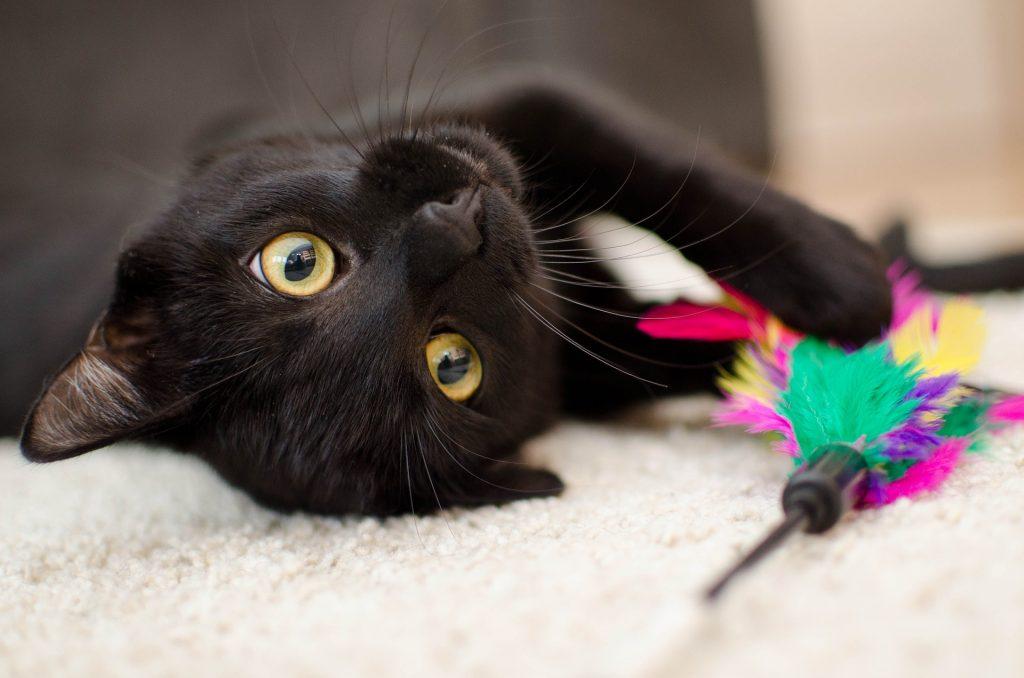 Chat noir aux yeux verts couché sur le côté qui a un plumeau entre les pattes