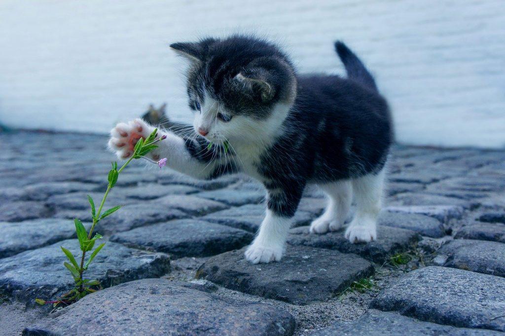 chaton qui joue avec une plante